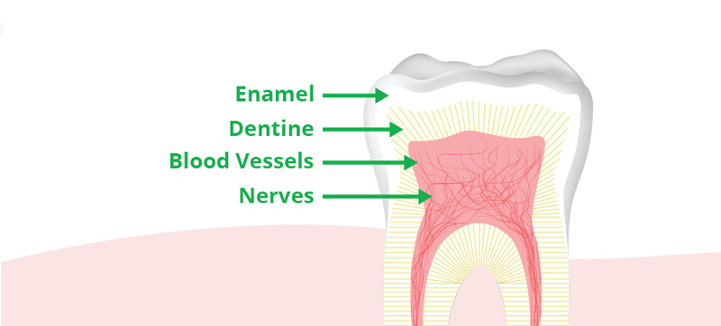 Tooth enamel biomin technologies limited armour for teeth also biting on hard materials like boiled sweets and toffee can cause the enamel to crack or chip and should be avoided ccuart Gallery